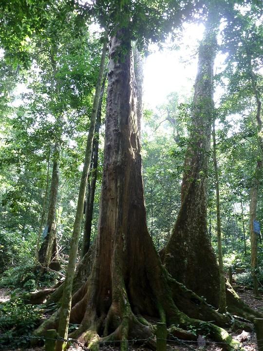 Den ouden boom