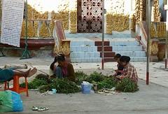 Vrouwen halen de bossen bloemen uit elkaar
