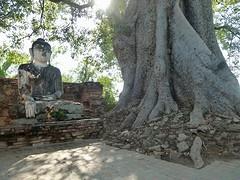 Buddha onder de boom bij Inwa