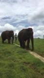 Wandelen met de olifanten