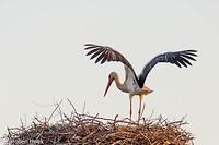 Dag 6 - Ooievaar op het nest