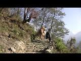 Annapurna Circuit - Dag 18 - Ghandruk - Pokhara