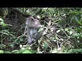 Bali - Ubud - Sacred Monkey Forest Sanctuary
