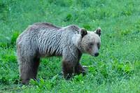 Dag 10 - de laatste beer
