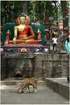 Dag 22 - Monkey Tempel -1