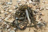 Dag 8 - Zeewier op het strand