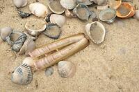 Dag 8 - Schelpen op het strand