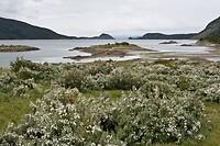 Dag 15 - Tierra del Fuego
