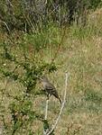 Dag 23 - onbekende vogel