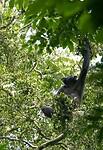 Dag 16 - Budongo Central Forest Reserve