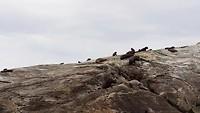 Zeehonden bij Doubtful sound
