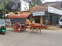 Met koe en wagen