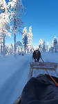 Rendier Lapland