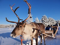Rudolf the rednose rendeer