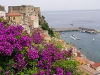 bloemen in Scilla