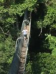 canopy wilma