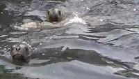 nog meer zeeleeuwen