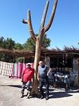 Cardon boom, de locals maken er mooie souvenirs van.