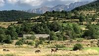 Wild horses, hebben alle vrijheid hier en lopen van weiland naar weiland