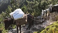 Donkeys on Mount Olympus