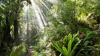 Amazone woud