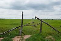 Eindeloze rijstvelden