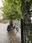 Only the lonely in de binnenstad