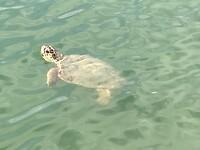 Grote schildpad in een lagune