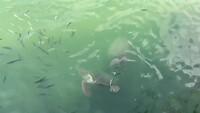 Schildpadden in lagune