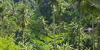 Prachtige sawa's bij Gunung Kawi