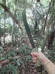 Met een machete de jungle door