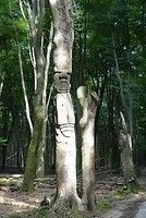 Ergens in het Speulderbos