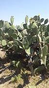 20160725_121236  Cactussen