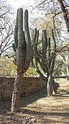 20160811_155623  Cactus