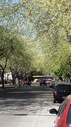 20160829_143313   Elke straat heeft bomen