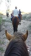 20160830_174649  Dorine te paard.6