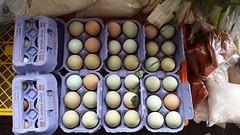 20160913_130251  Aruacana eieren