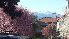 20160922_164514  Lente in Bariloche