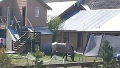 20161012_135903-1  Paard in de tuin