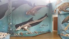 20161019_150351  museum walvissen