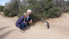 IMG-20161023-WA0007  ZD met Pinguin