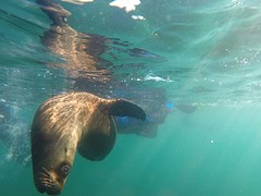 GOPR4797  onder water.2