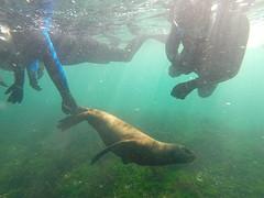 GOPR4860  onder water.3