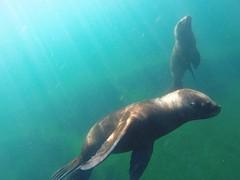 GOPR4802  onder water.4