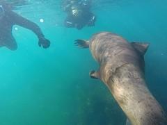 GOPR4841  onder water.5