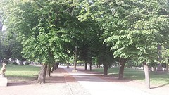 20161104_180338  PdA in Tandil is park
