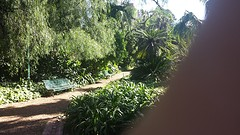 20161110_160738  Jardin Botanico.3
