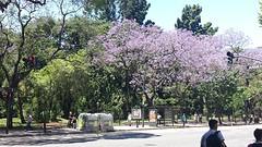 20161110_131827  Palermo in bloei.1