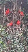 20161210_130253-1  Rode vogels
