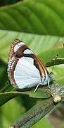 20161212_131347-1  Witte vlinder